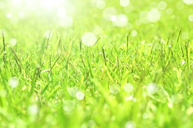隣の芝生は青い❢ならばどうするか?